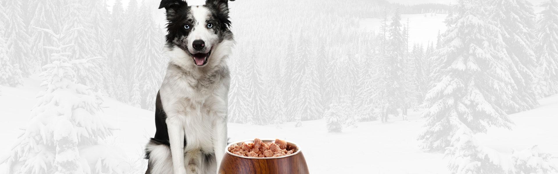 Pies - mięsożerca czy wszystkożerca?