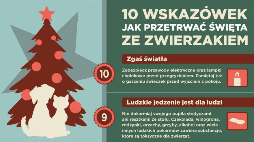 10 wskazówek jak przetrwać Święta ze zwierzakiem - Boże Narodzenie ze zwierzęciem